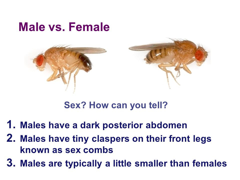 Male vs. Female Sex How can you tell
