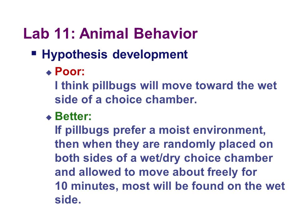 Lab 11: Animal Behavior Hypothesis development
