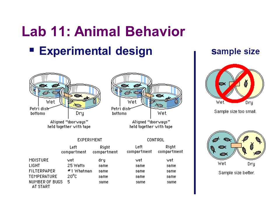 Lab 11: Animal Behavior Experimental design sample size