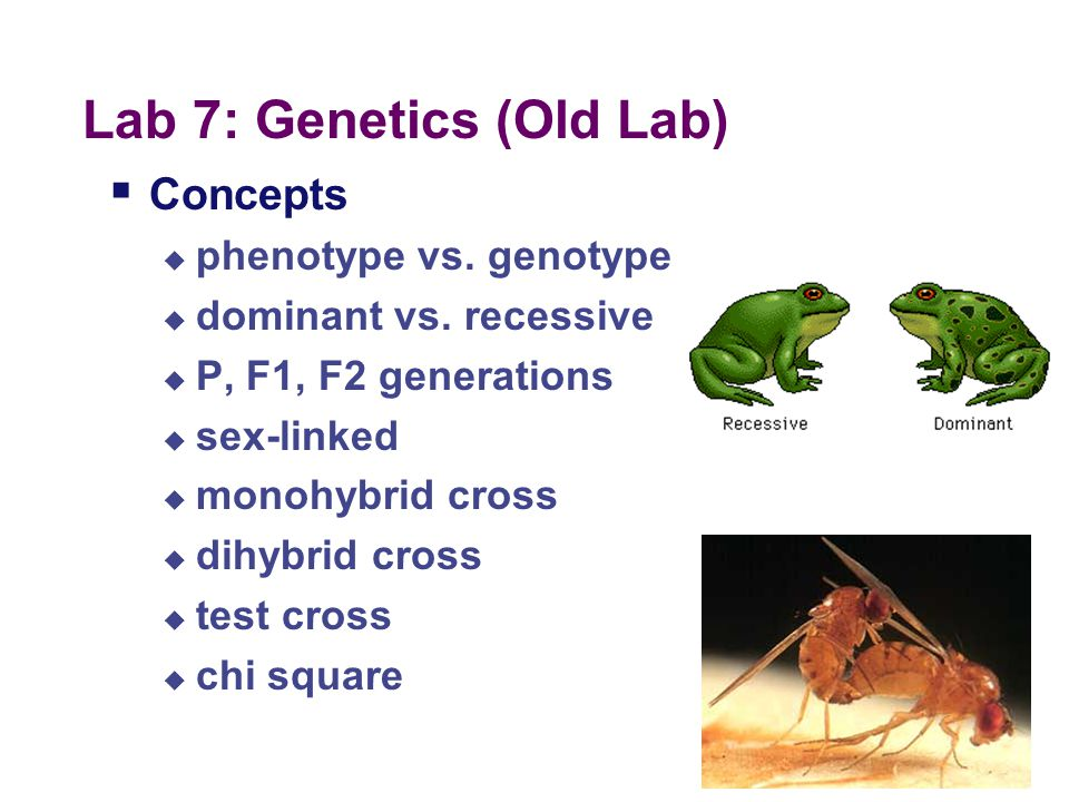 Lab 7: Genetics (Old Lab)