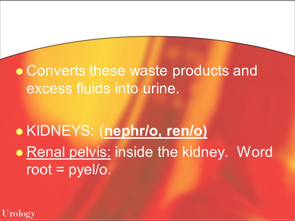 Converts these waste products and excess fluids into urine.