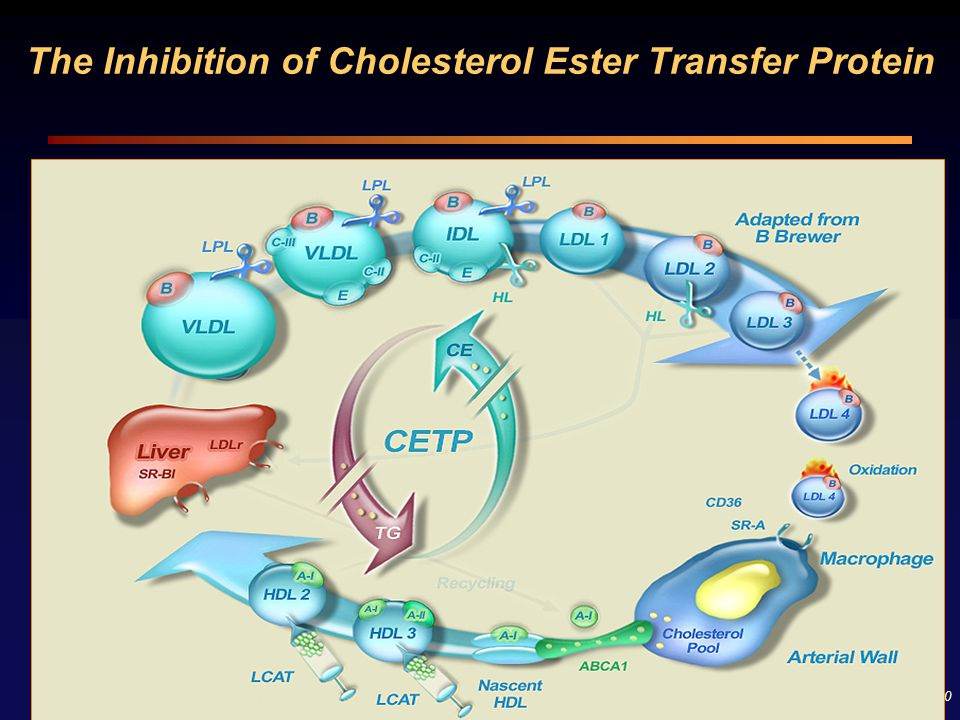 The Inhibition of Cholesterol Ester Transfer Protein