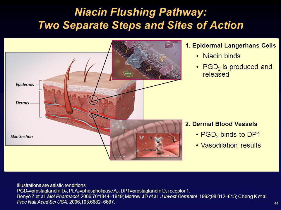 Niacin Flushing Pathway: Two Separate Steps and Sites of Action