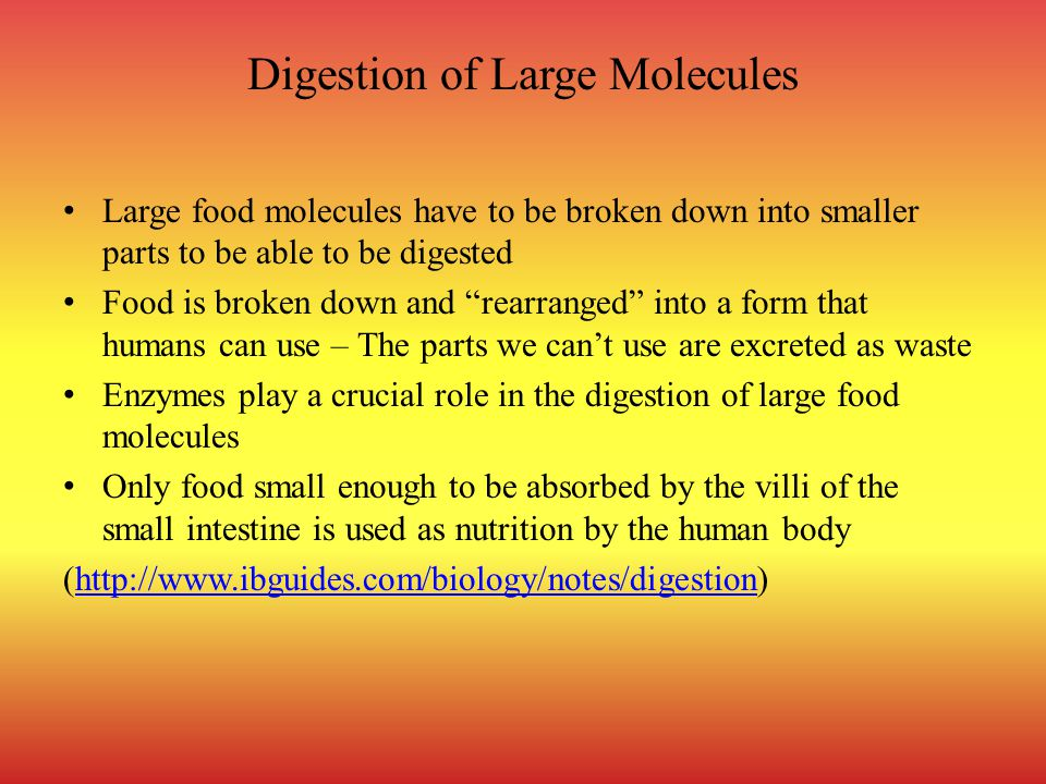 Digestion of Large Molecules