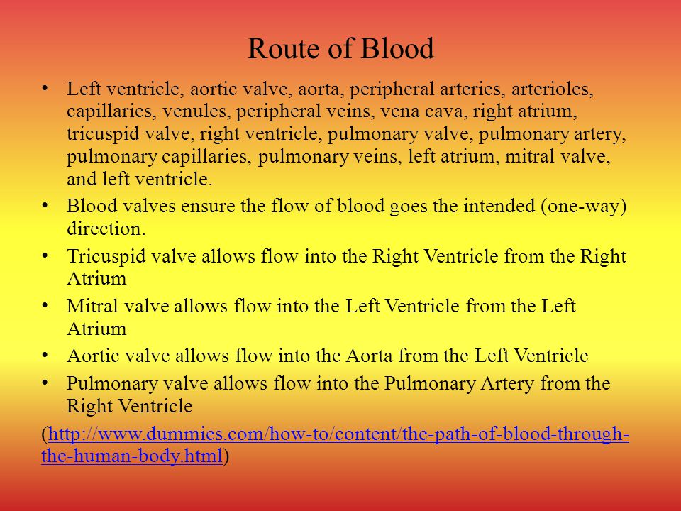 Route of Blood