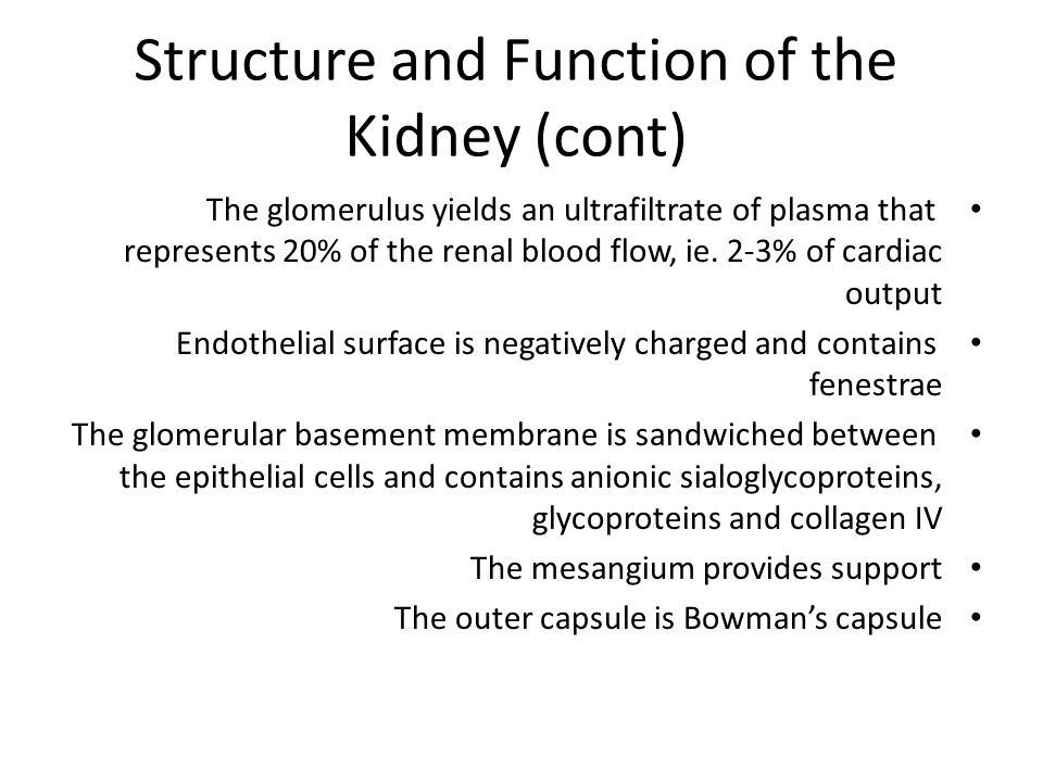 Structure and Function of the Kidney (cont)