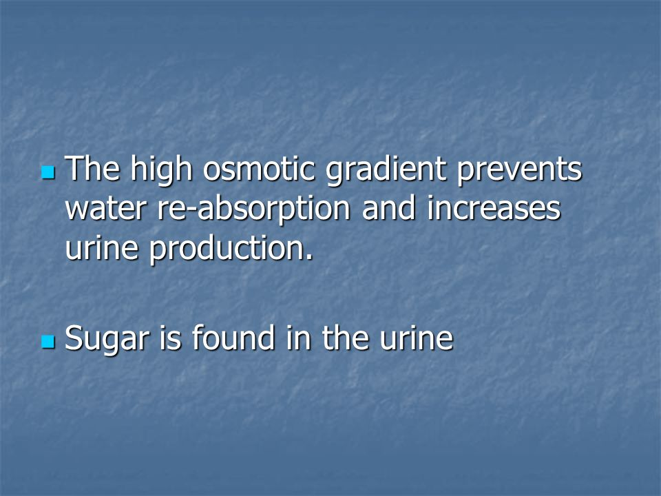The high osmotic gradient prevents water re-absorption and increases urine production.
