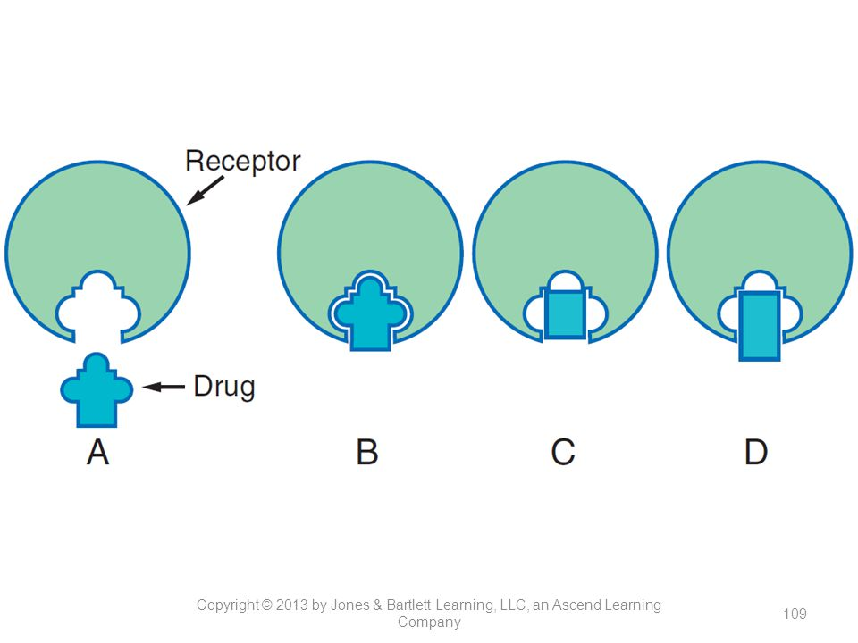 Figure 13-4. Lock and key fit between a drug and the receptors through which it acts. The site on the receptor that interacts with a drug has a definite shape. A drug that conforms to that shape can bind and produce a biological response. In this example, only the shape along the lower surface of the drug molecule is important in determining whether the drug binds to the receptor