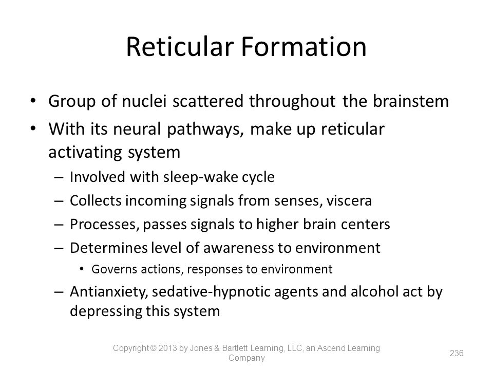 Reticular Formation Group of nuclei scattered throughout the brainstem