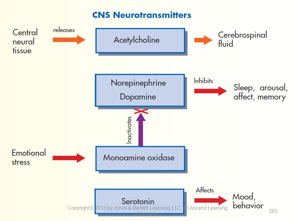 Figure 13-10. Neurotransmitters in the brain and their effects on emotion.