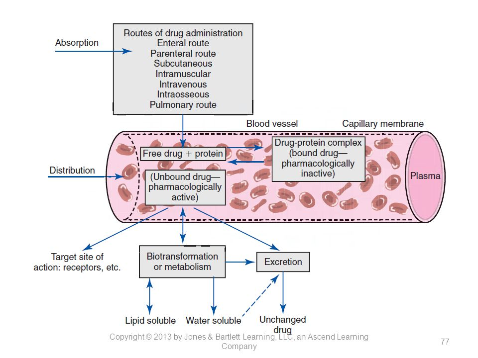 Figure 13-2. Pharmacokinetic phase of drug action, showing absorption distribution, biotransformation, and excretion of drugs. Only free drug is capable of movement for absorption, distribution to the target site of action, biotransformation, and excretion. The drug–protein complex represents bound drugs; because the molecule is large, it is trapped in the blood vessel and serves as a storage site for the drug.