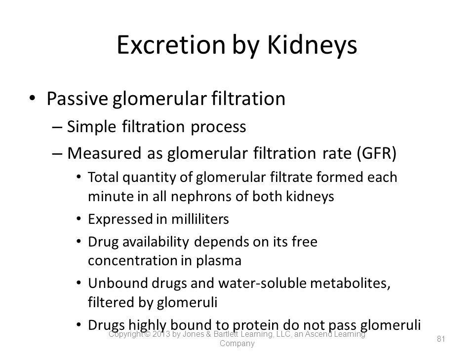 Excretion by Kidneys Passive glomerular filtration