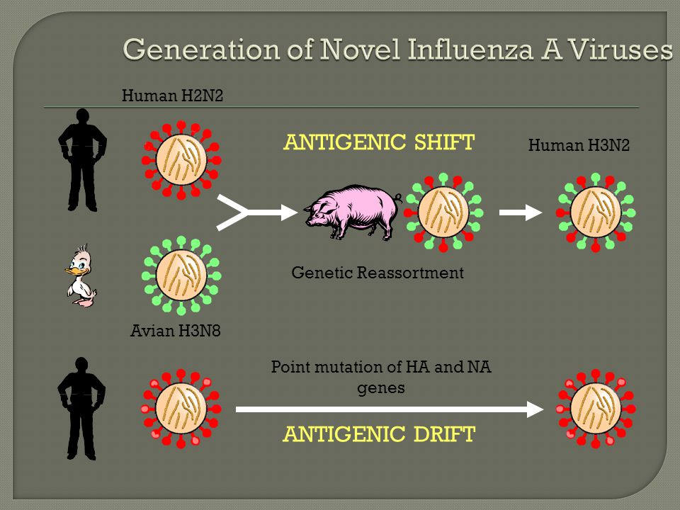 Generation of Novel Influenza A Viruses