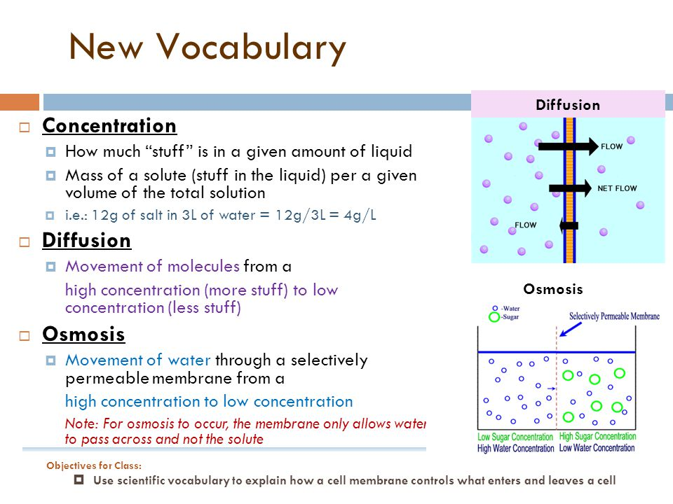 New Vocabulary Concentration Diffusion Osmosis