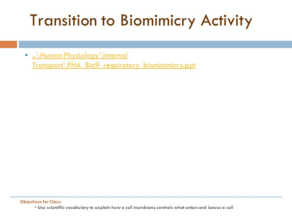 Transition to Biomimicry Activity