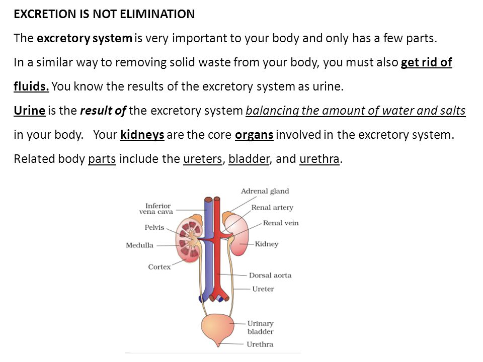 EXCRETION IS NOT ELIMINATION