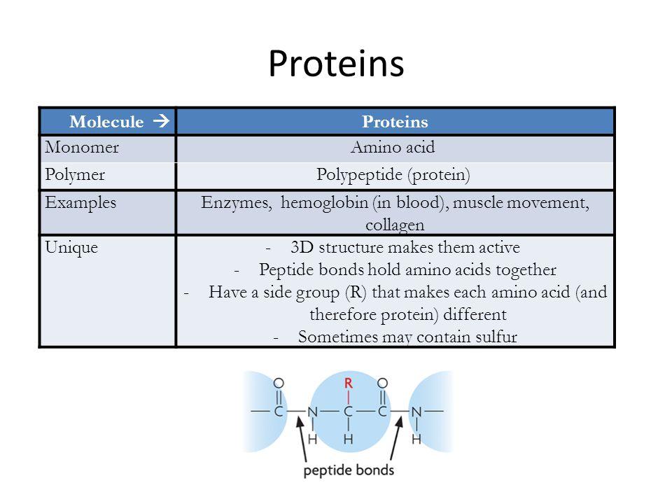 Proteins Molecule  Proteins Monomer Amino acid Polymer