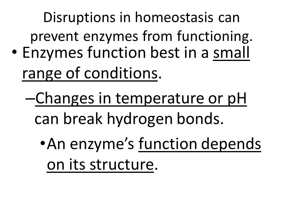 Disruptions in homeostasis can prevent enzymes from functioning.
