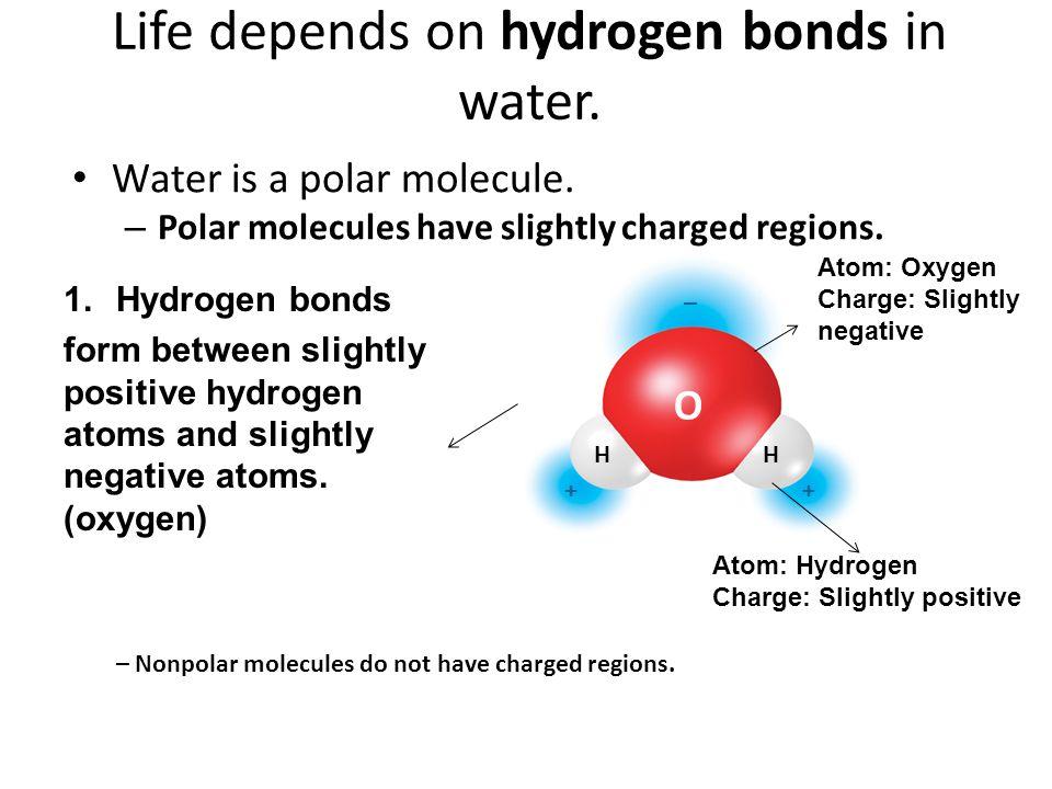Life depends on hydrogen bonds in water.