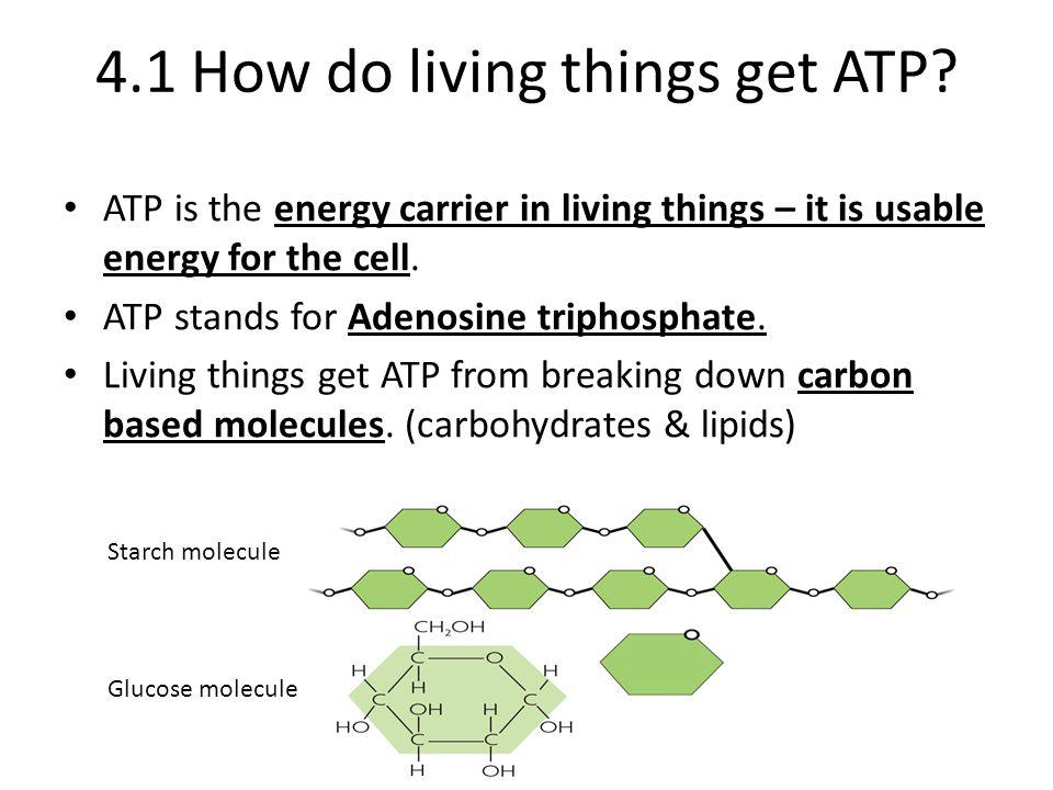 4.1 How do living things get ATP