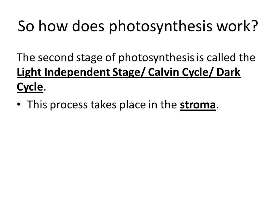 So how does photosynthesis work