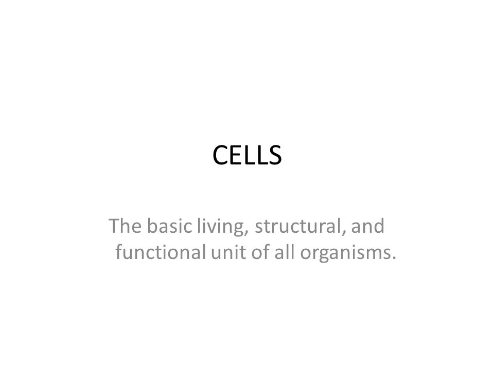 The basic living, structural, and functional unit of all organisms.