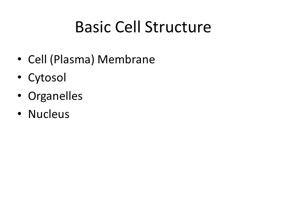 Basic Cell Structure Cell (Plasma) Membrane Cytosol Organelles Nucleus