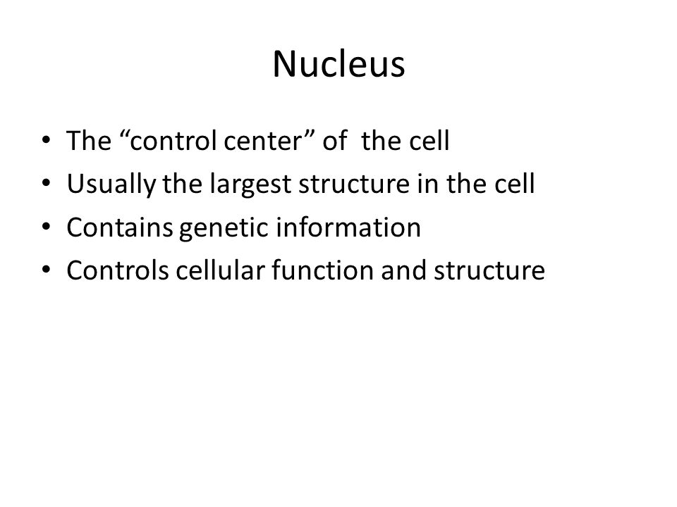 Nucleus The control center of the cell