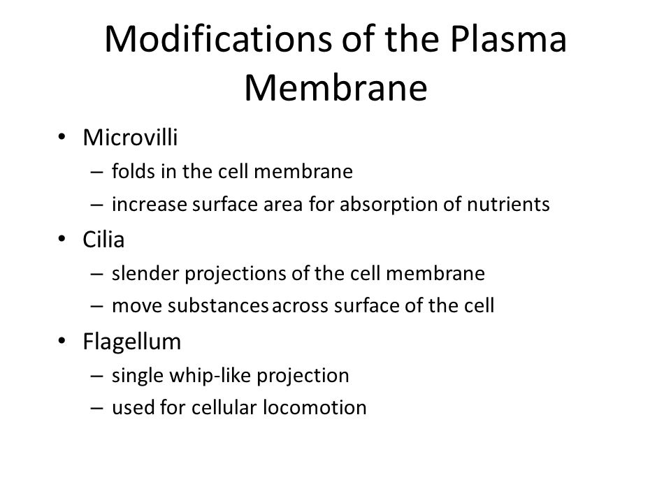 Modifications of the Plasma Membrane