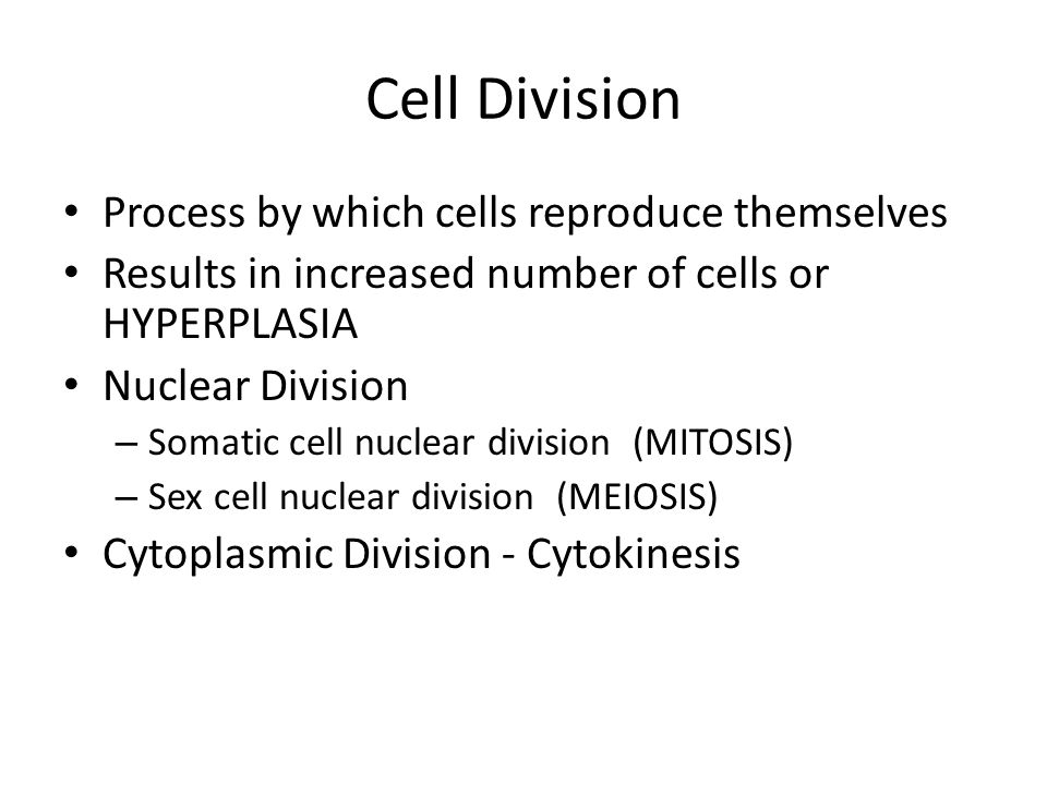 Cell Division Process by which cells reproduce themselves
