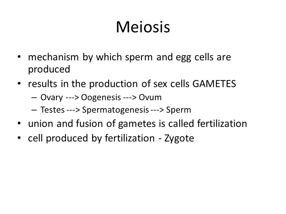 Meiosis mechanism by which sperm and egg cells are produced