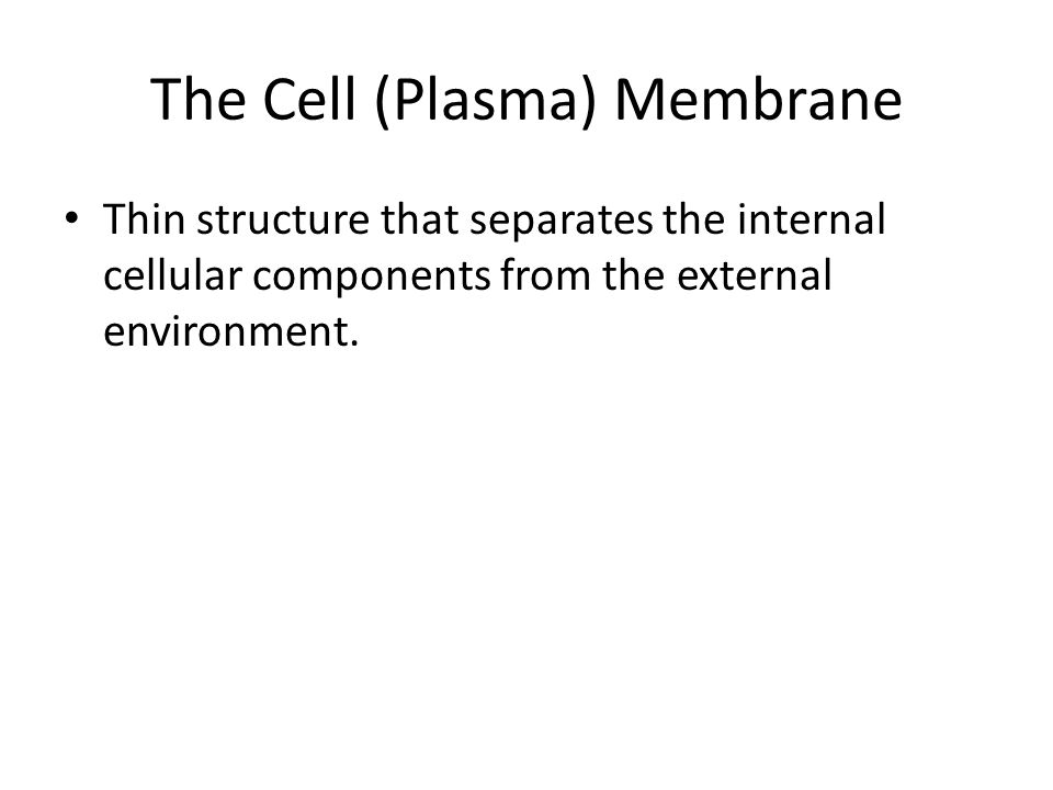 The Cell (Plasma) Membrane