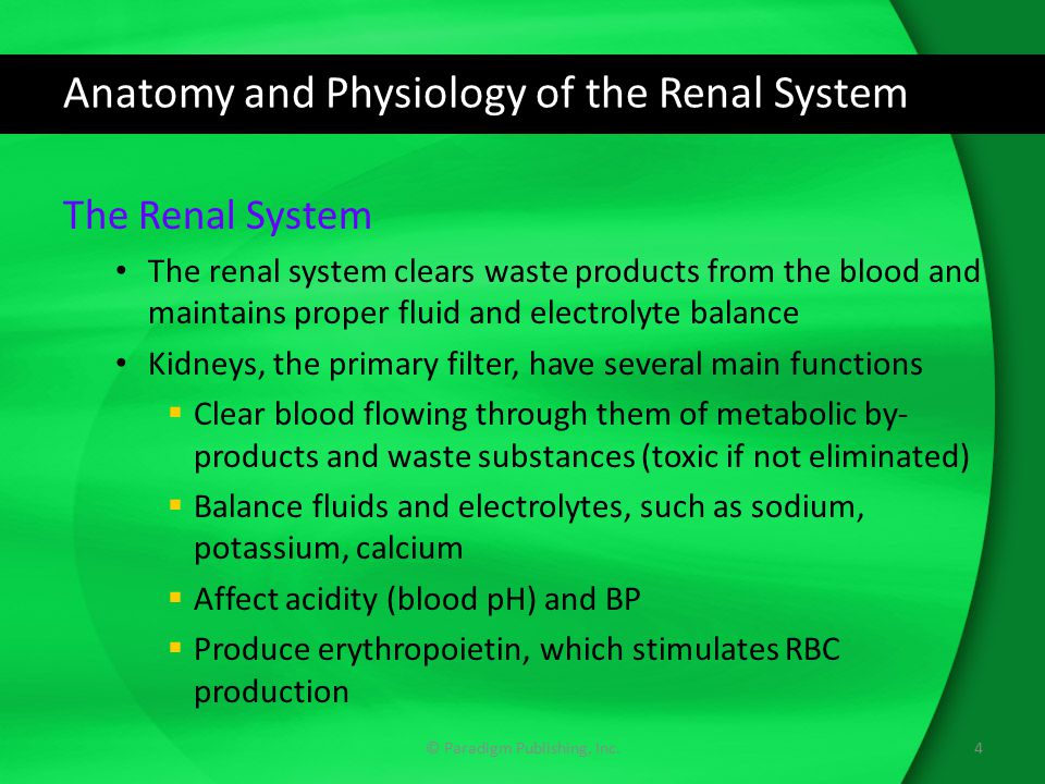 Anatomy and Physiology of the Renal System