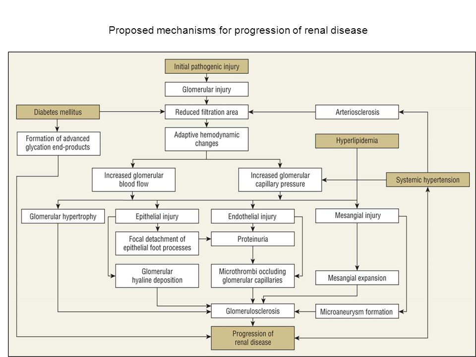 Proposed mechanisms for progression of renal disease