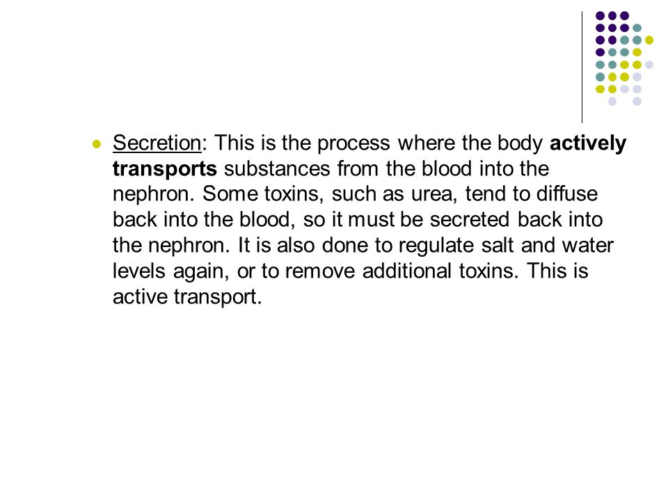 Secretion: This is the process where the body actively transports substances from the blood into the nephron.