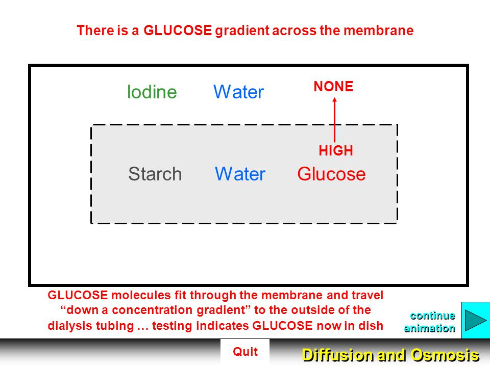 There is a GLUCOSE gradient across the membrane