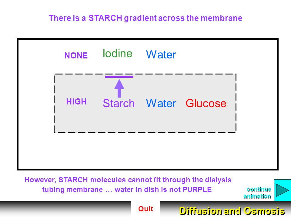 There is a STARCH gradient across the membrane