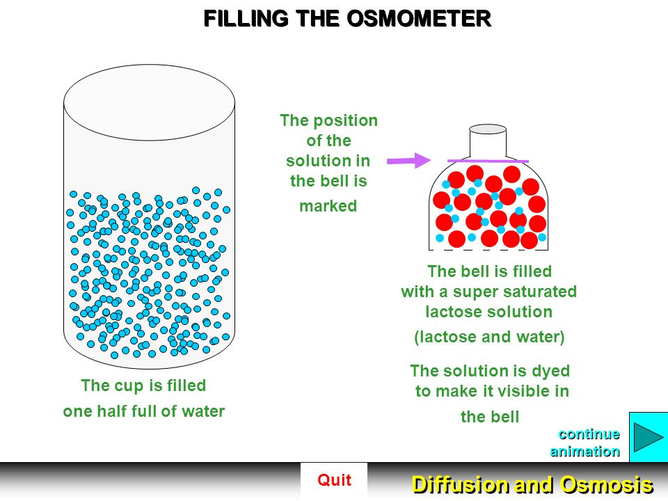 FILLING THE OSMOMETER Diffusion and Osmosis