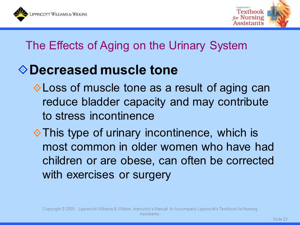 Decreased muscle tone The Effects of Aging on the Urinary System
