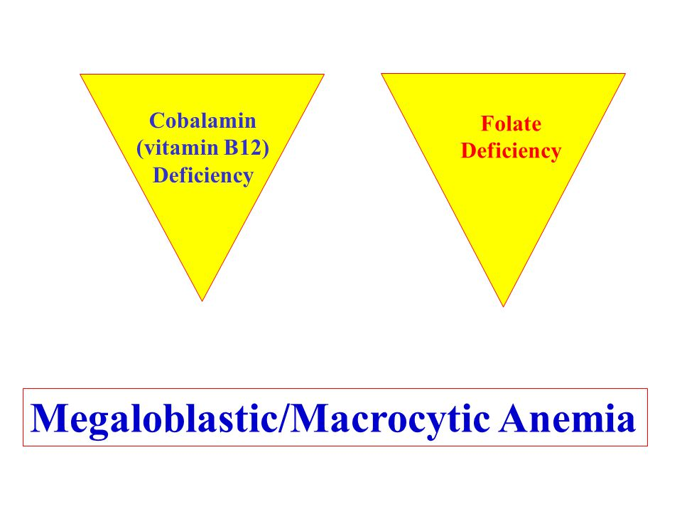 Megaloblastic/Macrocytic Anemia