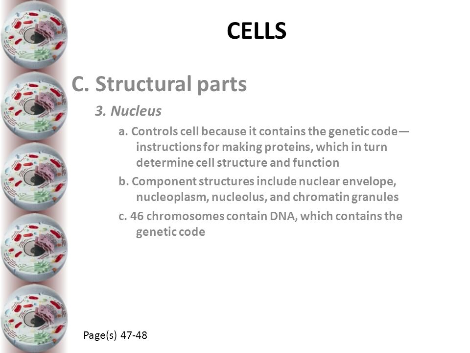 CELLS C. Structural parts 3. Nucleus