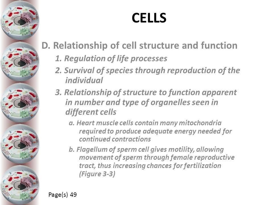 CELLS D. Relationship of cell structure and function