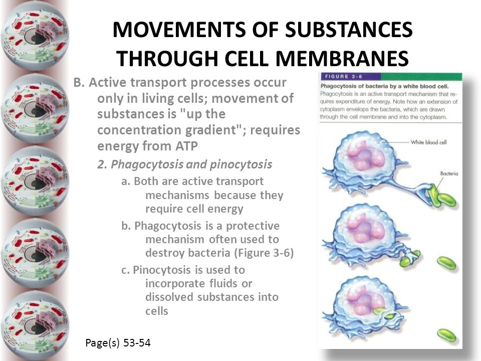 MOVEMENTS OF SUBSTANCES THROUGH CELL MEMBRANES