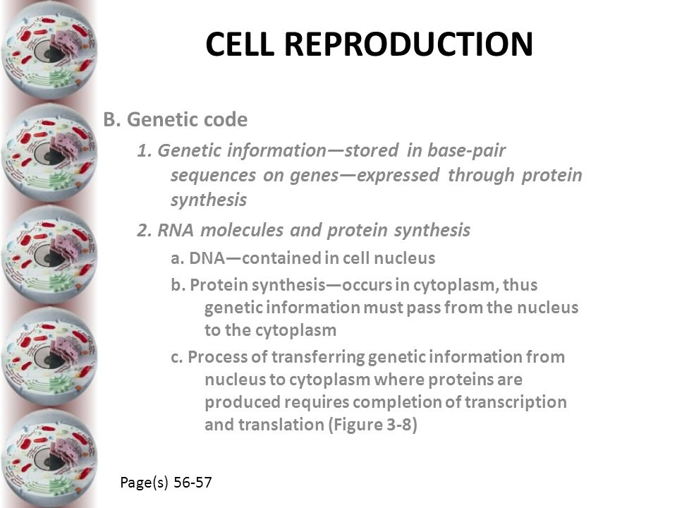 CELL REPRODUCTION B. Genetic code