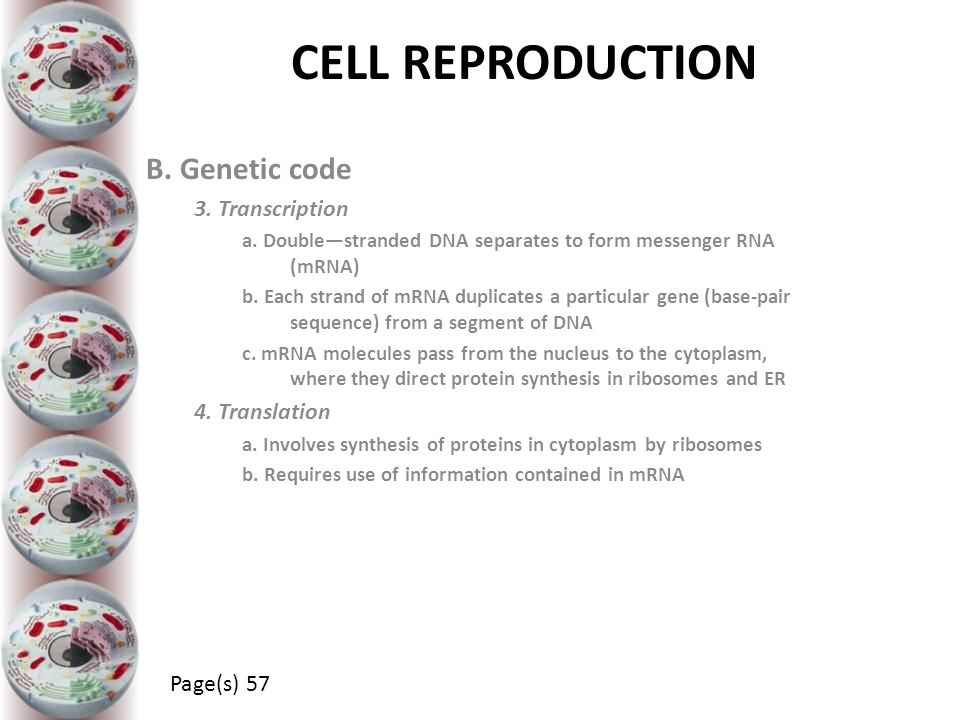 CELL REPRODUCTION B. Genetic code 3. Transcription 4. Translation