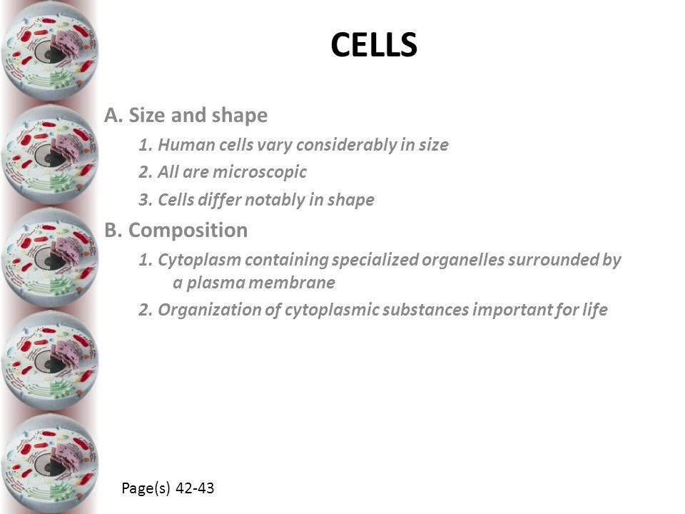 CELLS A. Size and shape B. Composition