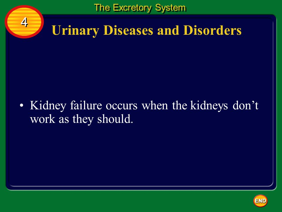 Urinary Diseases and Disorders