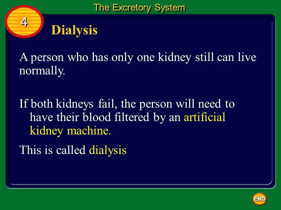 Dialysis 4 A person who has only one kidney still can live normally.