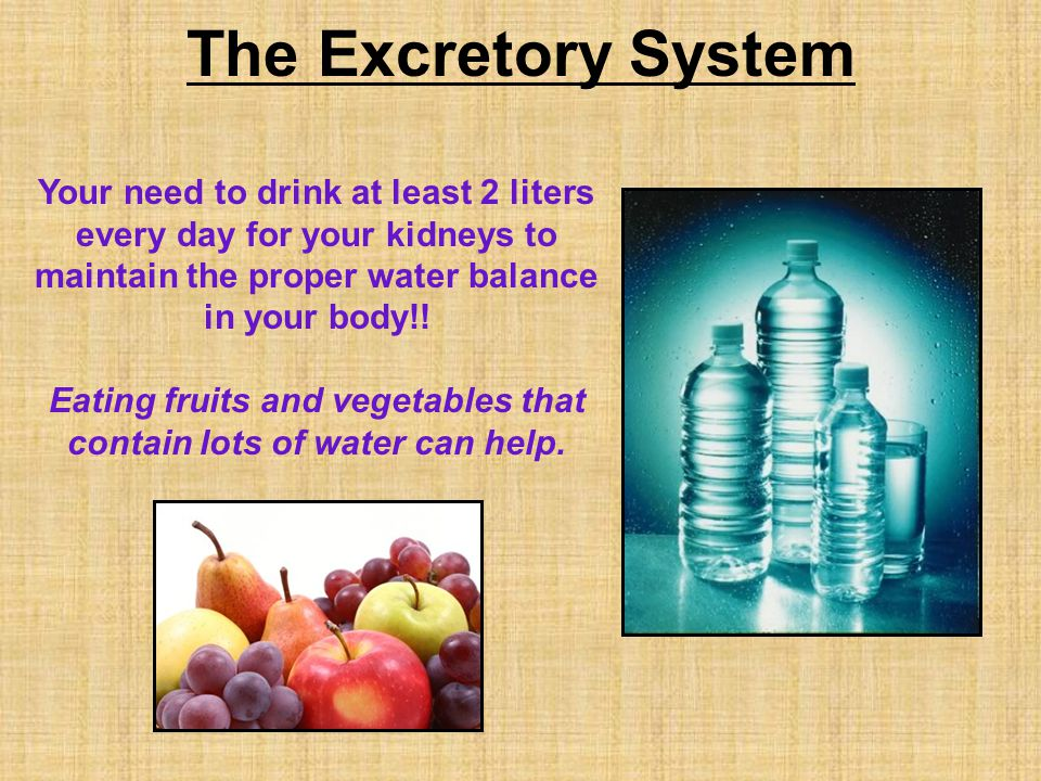 The Excretory System Your need to drink at least 2 liters