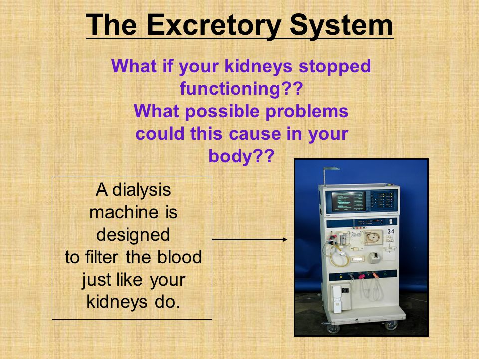 The Excretory System What if your kidneys stopped functioning